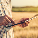 Smart farming, using modern technologies in agriculture. Male agronomist farmer with digital tablet computer in wheat field using apps and internet in agricultural production and crop protection, selective focus